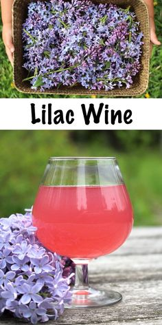Homebrewing recipes Homemade Lilac Wine ~ Lilacs are delicious edible flowers and they make a wonderful homemade floral wine. Looking for a unique winemaking recipe Seek no further! Homemade Wine Recipes, Homemade Alcohol, Homemade Desserts, Blueberry Water, Mead Recipe, Peach Wine, Wine Yeast, Homebrew Recipes, Fermented Foods