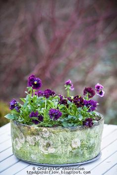 Pansies are always dandy in a rustic container