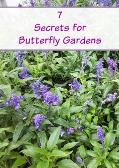Everything Plants and Flowers: 7 Secrets for Successful Butterfly Gardens