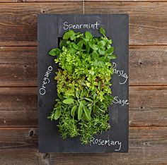 Aesthetics Of This Product Is Not The Same As Buying A Living Wall Planter.  Still A Cool Idea That Peopu2026 | Pinteresu2026