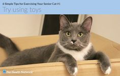 Learn six simple steps to help your senior cat exercise through play, toys and even treats.