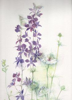 この時期うちのお庭は青く染まる。この千鳥草はじめニゲラ、シナワスレナグサが一面に咲く。いちばんよい季節。紫陽花が咲き出した。季節は動いている。チドリソウ(千鳥草)学名:Consolidaajacis科名:キンポウゲ科開花時期:5~6月原産地:ヨーロッパ南部分布:地中海地域から中央アジア別名:飛燕草ラークスパー和名ではヒエンソウ属であり花姿から飛燕草の名を持つ。英名の「ラークスパー」は、花の後ろに突き出た距をひばりのけづめに見立てたものである。花言葉:底抜けに陽気、晴れやかな心今年も青く Illustration Flower, Botanical Drawings, Floral Watercolor, Flowers, Painting, Watercolour, Painting Art, Paintings, Royal Icing Flowers