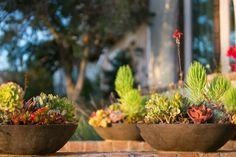 arrangement floral et pots de plante avec succulents