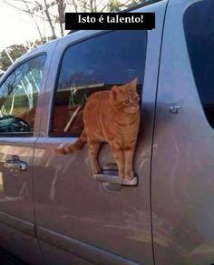 Iuuupiiiii! Mais Um Dia de Gato!
