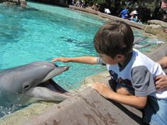 Dolphin cove at Seaworld!