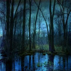 Surreal Landscape Photograph Woodland by Suzanne Harford Photo, $15.00. http://etsy.com