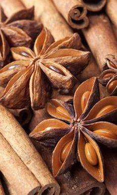 Star anises and cinnamon - Brown things