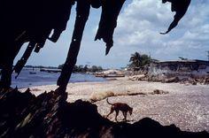 Alex Webb - Panama. Puerto Caimito. 1999.