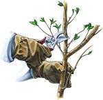 Learn the art of tree pruning. When to prune, why to prune, as well as pruning tips and techniques.