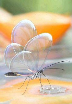 Borboleta de asa transparente