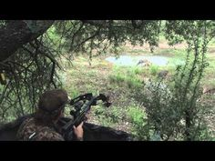 272 inch Whitetail Buck Taken with a Crossbow in PA with The Hunting Company! - YouTube
