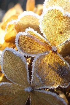 """""""Fire and Ice by Anne, Fotografie van winter, ijs en natuur, ijskristallen en ijsbloemen, tuinieren, seizoenen, buiten"""