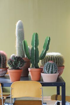 Cacti in terracotta plant pots