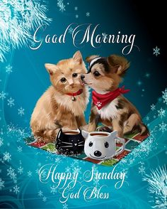 Good Morning, Happy Sunday, I pray that you have a safe, happy and blessed day today! Happy Sunday Quotes, Good Morning World, Good Night Image, Morning Greeting, Inspirational Message, Christmas Morning, Pet Names, Trust Yourself, Facebook Sign Up