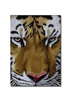 TIGER 17 portrait big cat feline pencil painting Sandrine Curtiss Art Limited Edition Print ACEO by Sandrinesgallery