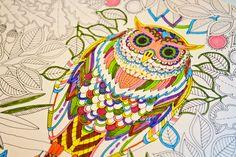 Secret Garden -Johanna Basford - want this book - love this Owl