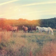 horses-love the look of this photo!