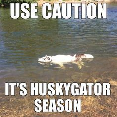 Be careful out there! Funny Dog Quotes The p - Funny Dog Quotes - Be careful out there! Funny Dog Quotes The post Be careful out there! appeared first on Gag Dad. The post Be careful out there! Funny Dog Quotes The p appeared first on Gag Dad. Animal Jokes, Funny Animal Memes, Cute Funny Animals, Funny Animal Pictures, Cute Baby Animals, Funny Cute, Moose Pictures, Top Funny, Hilarious
