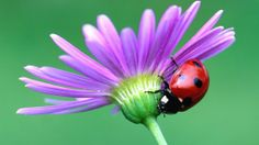 Guida su quali piante mettere in #giardino o nell #orto per attirare gli insetti utili e alimentare la #biodiversità #agricola. - #biodinamica