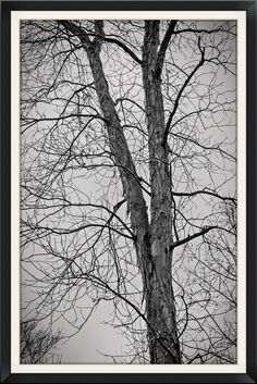https://flic.kr/p/qjUski | An Escapement of Trees | During the cold winter months, trees escape the cold harshness of the ground below, attempting to reach the heavens despite the clouds.  Vignetting used to enhance mood.