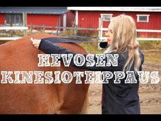 Minulta kysytään jatkuvasti, voiko hevosta kinesioteipata. Katso koko video ja lue lisää blogista osoitteessa: http://impulsoblogi.blogspot.fi/2017/03/voiko-hevosta-kinesioteipata.html hevosteippaus, hevosen kinesioteippaus, hevoshieronta, hevoshieroja, Tampere, Jämsä