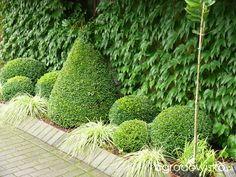 Ogród mały, ale pojemny;) - strona 134 - Forum ogrodnicze - Ogrodowisko