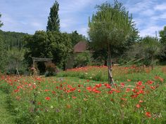 Our French garden in the beautiful Dordogne: More Meadow