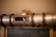 As I understand it, this tube runs around the top of the room.  cat-transit-system-1