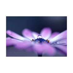 50 Mind-Blowing Examples of Macro Photography | Inspiration ❤ liked on Polyvore