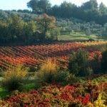 Montefalco, de wijnstad van Umbrie - Elke Dag Italie