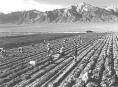 Sugar Beet Farm - Japanese Internment///As a young boy in the 60's, I spent so much time hoeing, and thinning sugar beets. It was an LDS volunteer church service project. The farm was in South Jordan, Utah. There's homes there now.