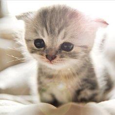 #Cats  #Cat  #Kittens  #Kitten  #Kitty  #Pets  #Pet  #Meow  #Moe  #CuteCats  #CuteCat #CuteKittens #CuteKitten #MeowMoe      Wake up, it's food time! ...   http://www.meowmoe.com/101028/