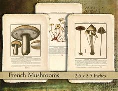 digital download collage sheet shabby French mushrooms champignon clipart printable tags ATC gift tags instant download ACEO