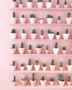 - Cactus - Le cactus et le rose : deux tendances déco qu'on adore pour ajouter une touche . The cactus and the rose: two decorative trends that we love to add a tropical touch to its interior. The cactus inspired us a candle-jewel, Sweet Cactus. Aesthetic Pastel Wallpaper, Pink Wallpaper, Aesthetic Wallpapers, Aesthetic Pastel Pink, Aesthetic Grunge, Aesthetic Vintage, Wallpaper Quotes, Wallpaper Backgrounds, Photo Wall Collage