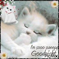 Good night sister and all, sweet dreams♥★♥. Good Night Cat, Good Night Sister, Good Night My Friend, Good Night Prayer, Cute Good Night, Good Night Blessings, Good Night Sweet Dreams, Good Night Image, Good Night Friends Images