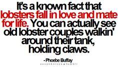 """He is her lobster"" - Phoebe Buffay"