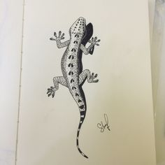 Lizard black and white drawing