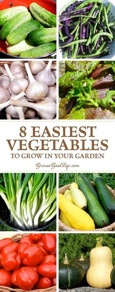 Do you want to grow and preserve your own vegetables, but worry that you won't have the time to tend to your garden? Whether you are new at gardening, pressed for time, or just want to grow a vegetable garden with the least amount of effort, these are some of the easiest vegetables to grow.