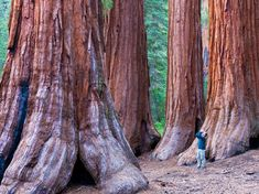 Standing in the middle of California's Redwood National Park is a humbling experience to be sure, especially when you look straight up at the 2,000-year-old, 300-feet-tall natural giants.