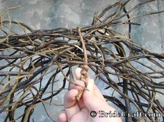 New Wedding Arch Branches Curly Willow Ideas Trendy Wedding, Fall Wedding, Rustic Wedding, Our Wedding, Wedding Stuff, 2017 Wedding, Christmas Wedding, Dream Wedding, Diy Wedding Arbor