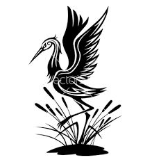 Image result for black heron bird