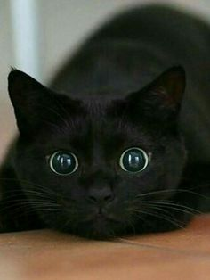 Amazing look on this black cat. Those eyes!