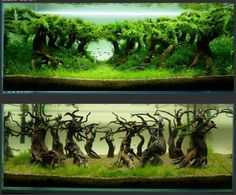 Grow out progression on trees in aquascape