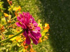arome-fel-de-fel-amalia: LUNEA FLORILOR