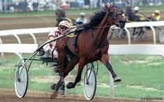 Only one horse has won four Breeders Crown finals, and that horse is Peace Corps -- with wins in 1990 and Race Horses, Horse Racing, Standardbred Racing, Bay Horse, Harness Racing, Peace Corps, Donkeys, Beautiful Horses, Tack