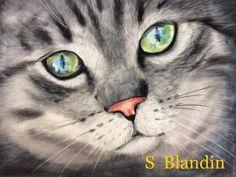 "Sylvie-Blandin - Artiste Peintre : ""Regard de chat"" - pastels"