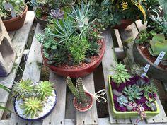 Holiday Gift Pots at Green Things
