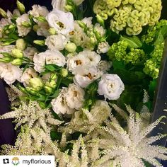 Color scheme on point.   #Repost @myflorious with @repostapp  Filling up our coolers this morning with a delivery from @dvflora  #flowers #flowerstagram #flowersofinstagram #florist #jerseycityflorist #floristlife #bouquet #myflorious #floraldesign