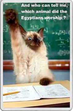 Siamese cat at school fun FRIDGE MAGNET top gift teacher animal feline lover   eBay
