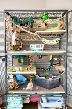 Our double Critter Nation set up in a beautiful jungle theme. Filled with lots of natural materials, jungle themed handmade hammocks and a dig box. Chinchillas, Pet Rodents, Cute Ferrets, Cute Rats, Chinchilla Cage, Ferret Cage, Pet Ferret, Pet Rat Cages, Pet Cage